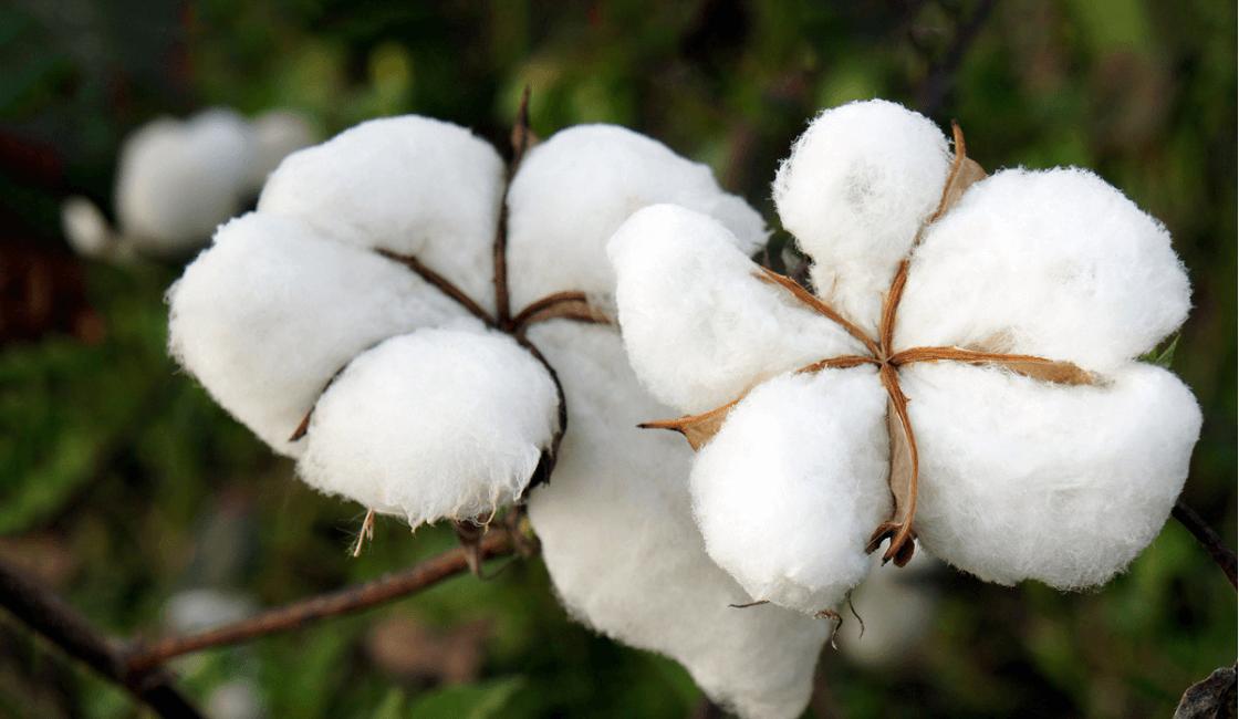 utilice algodon en las prendas de su bebe