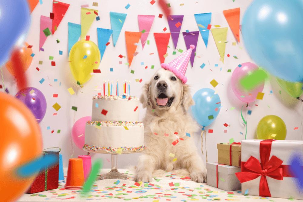 Fiesta tematica de cumpleaños para perros