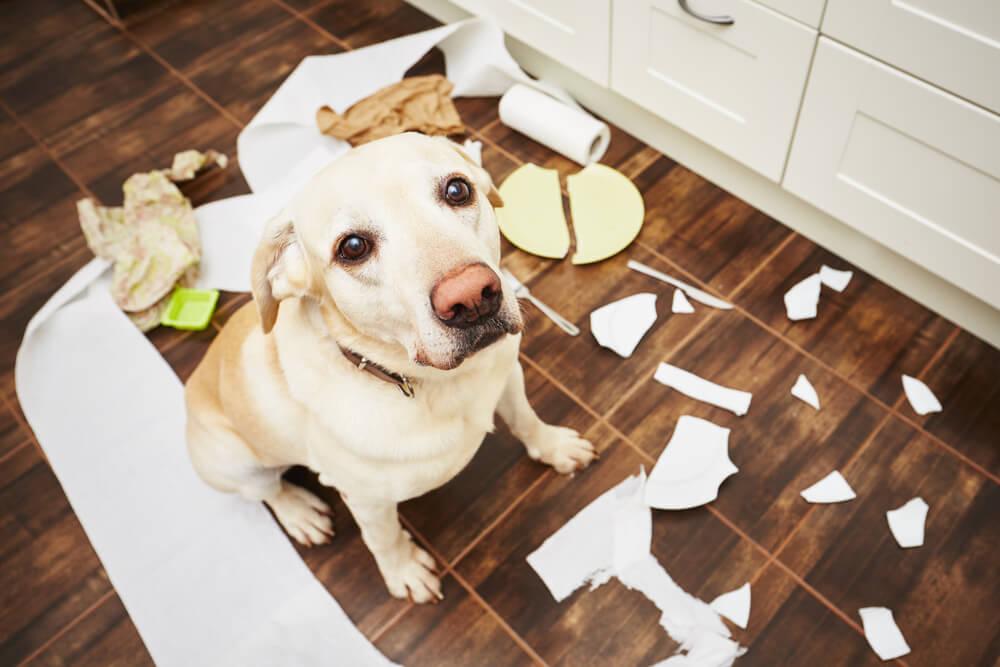 consejos para cuidar correctamente a un perro