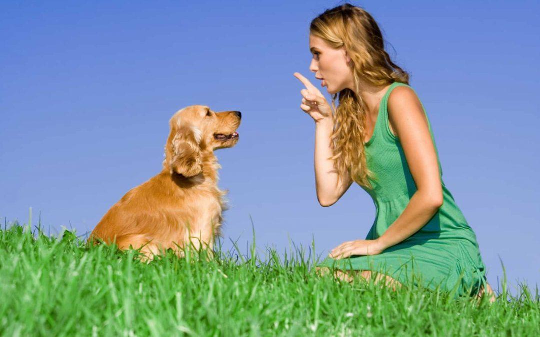 consejos para adiestrar correctamente a un perro