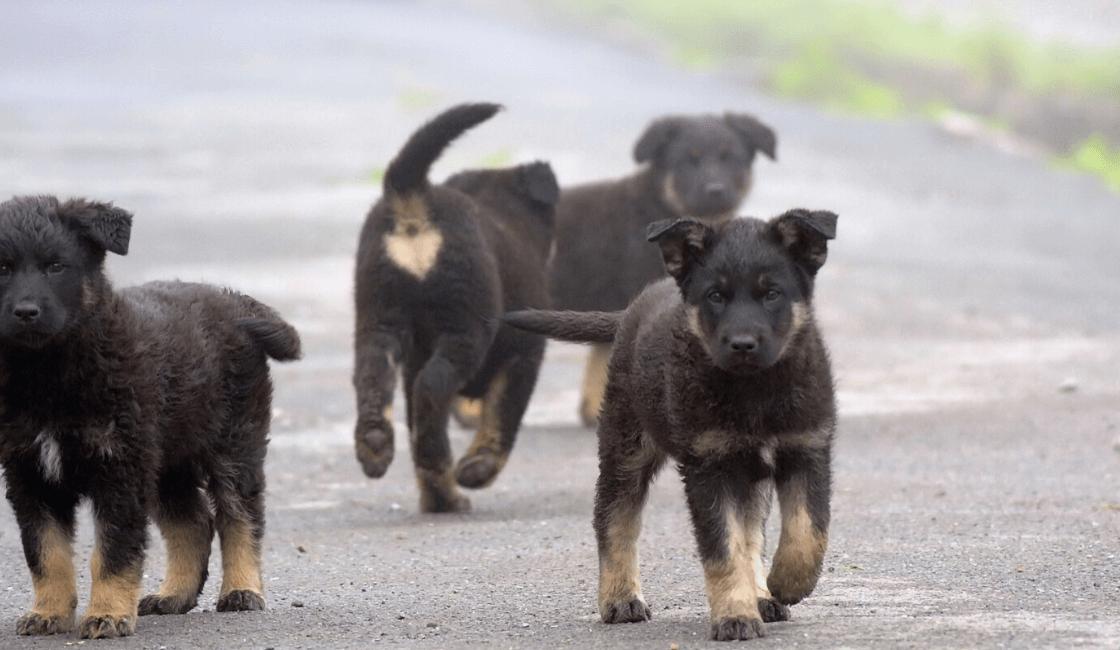 cachorros en la calle