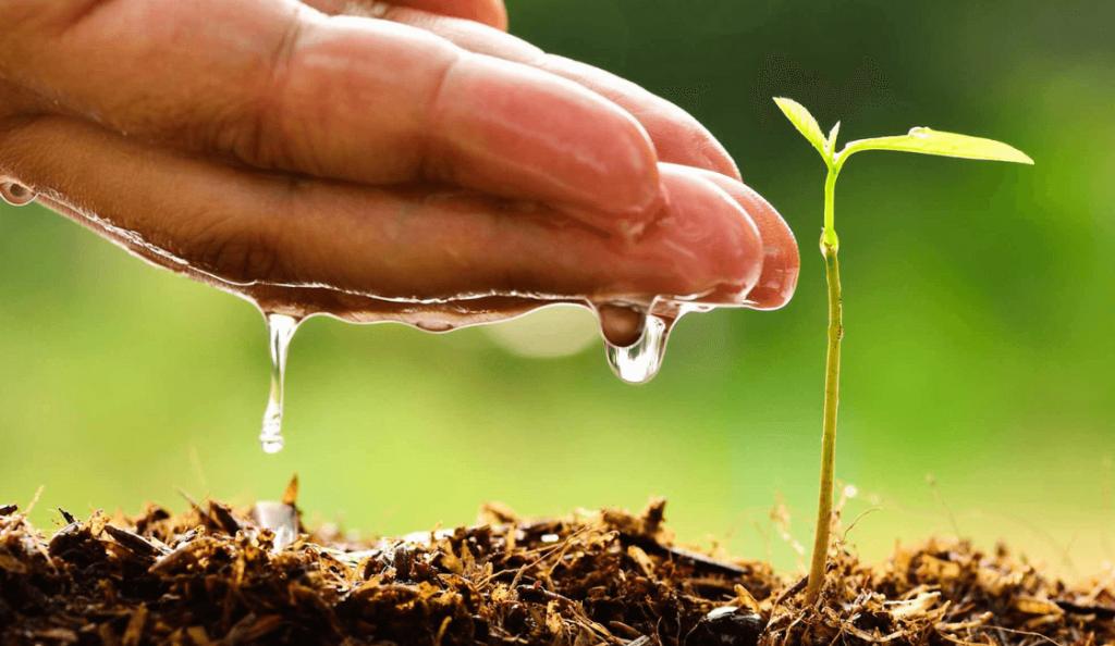 Acciones para Cuidar el Medio Ambiente y el Planeta