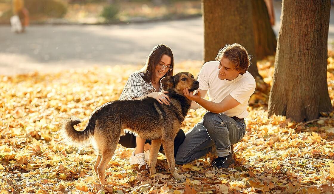 Páginas para adopción de perros y cachorros gratis en Perú, España y México