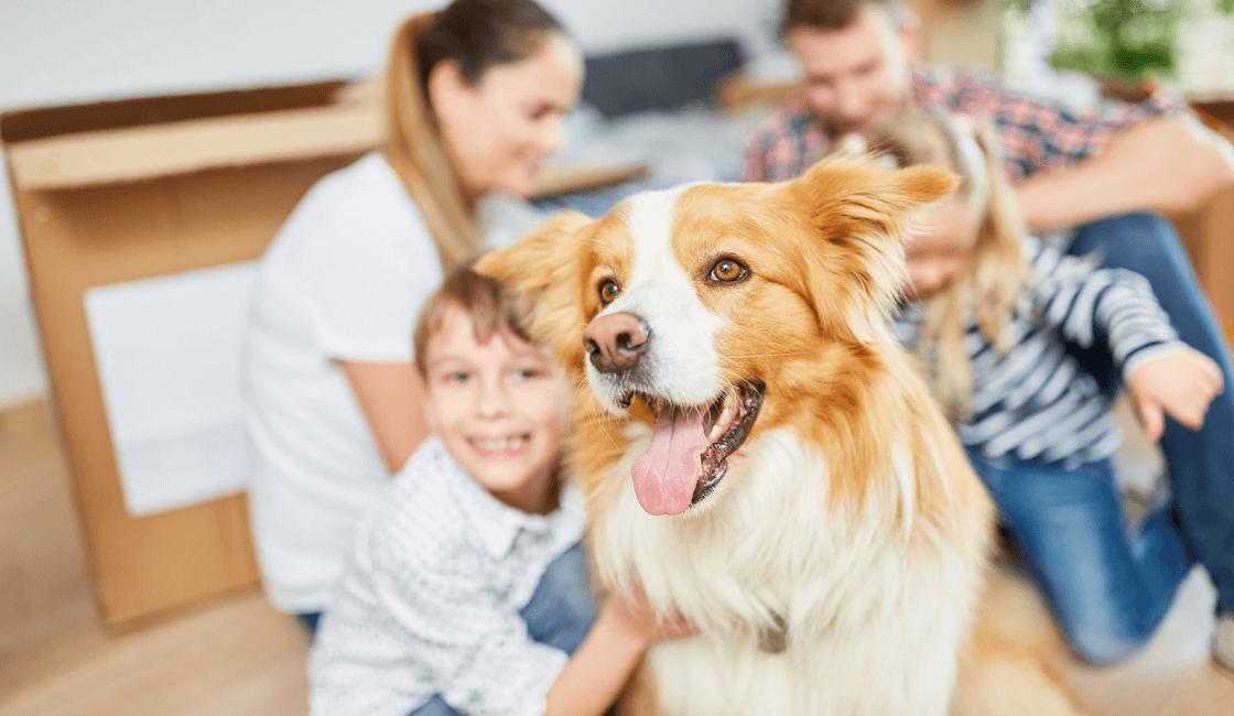 perro con familia y cuidados después de castrar a un perro