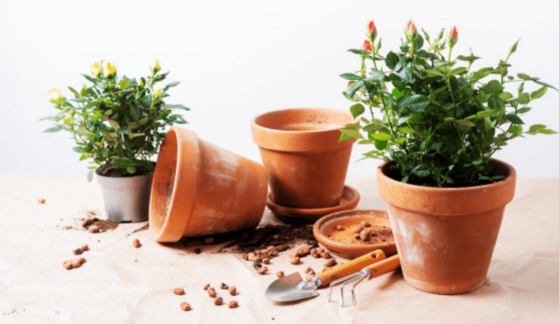 Macetas medianas ideales para rosas