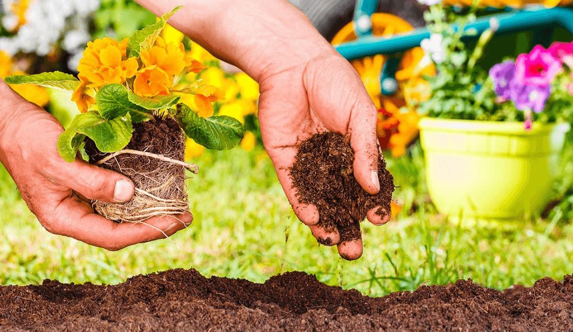 Nutrientes de café en tierra