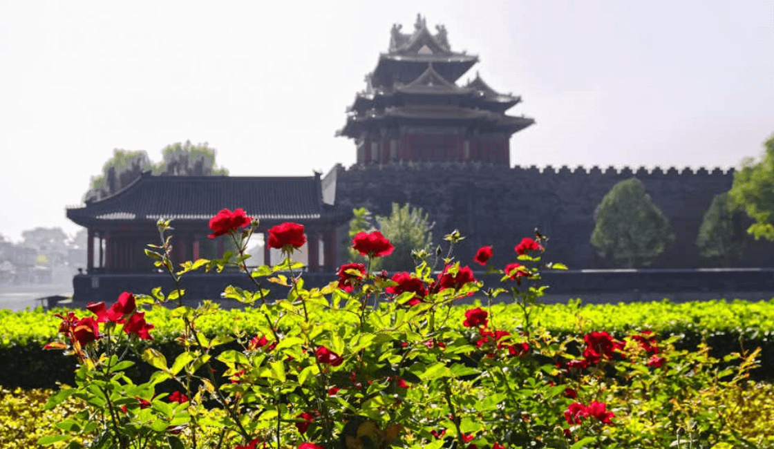 Rosas en época imperial China