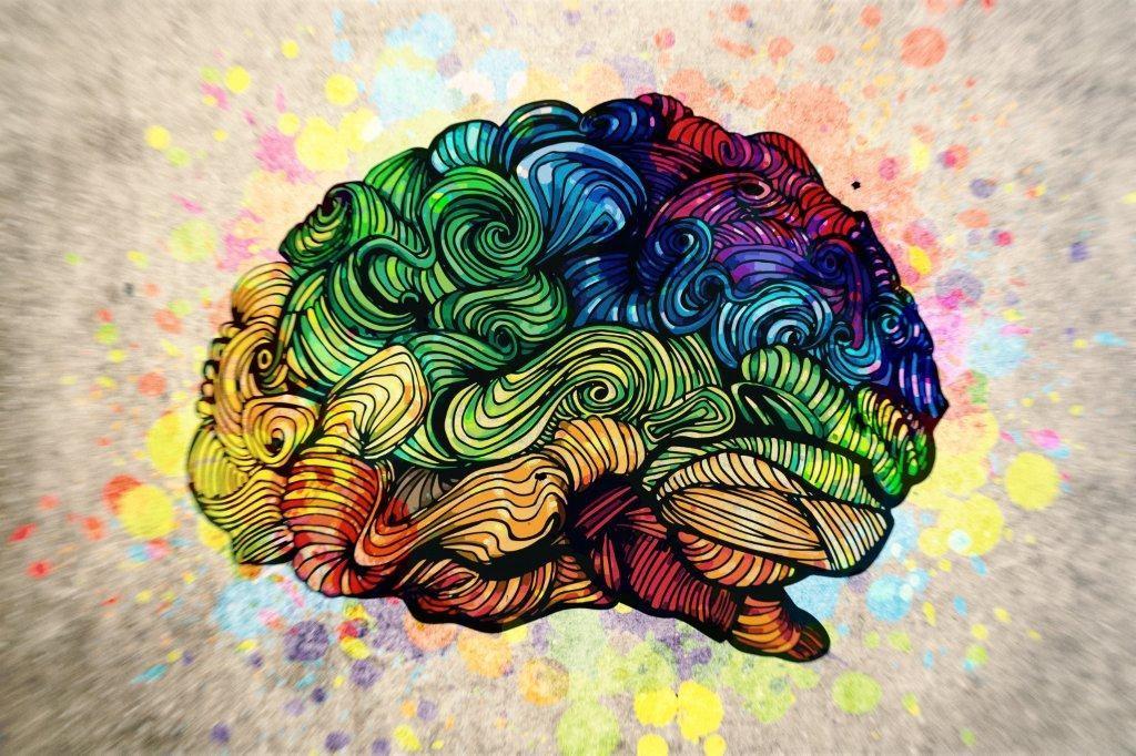 Cerebro colores