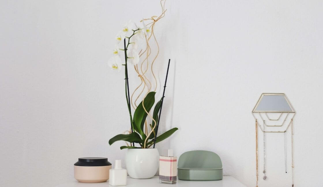 orquidea phalaenopsis cuidados y mantenimiento en casa en estante